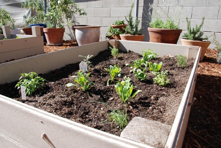 reggio garden 2